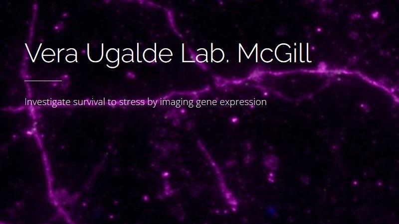 www,veraugaldelab.net